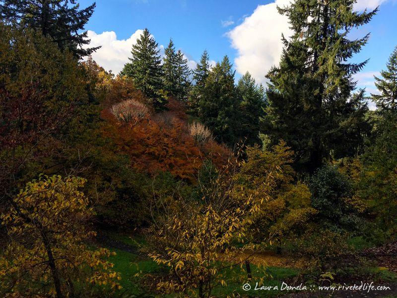 Arboretum_fall-9931