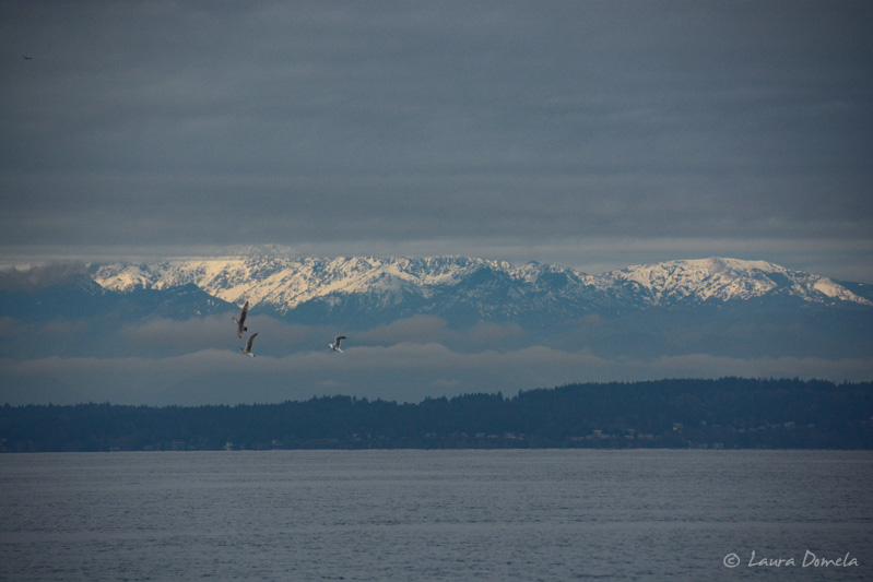 Pugetsound-0252