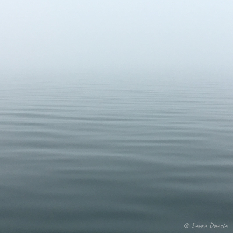 Fog-0447