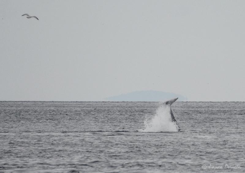 Orcas-0417