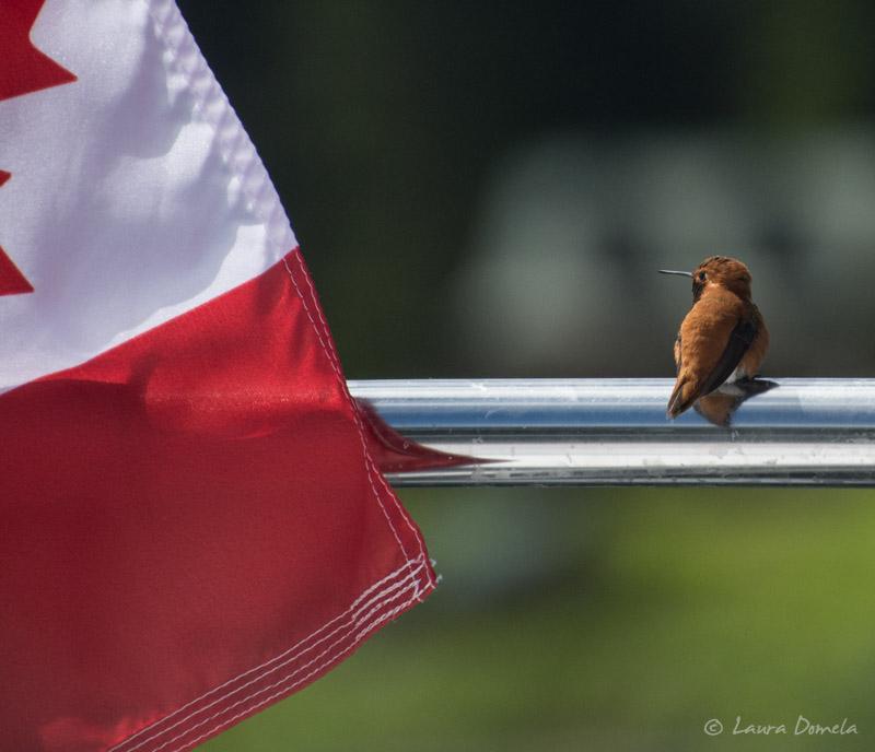Humms_flag-0815