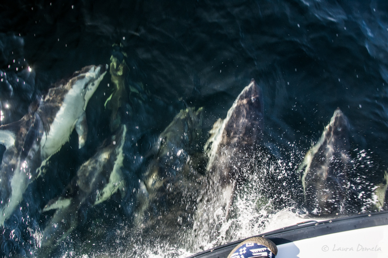 Dolphins-0964