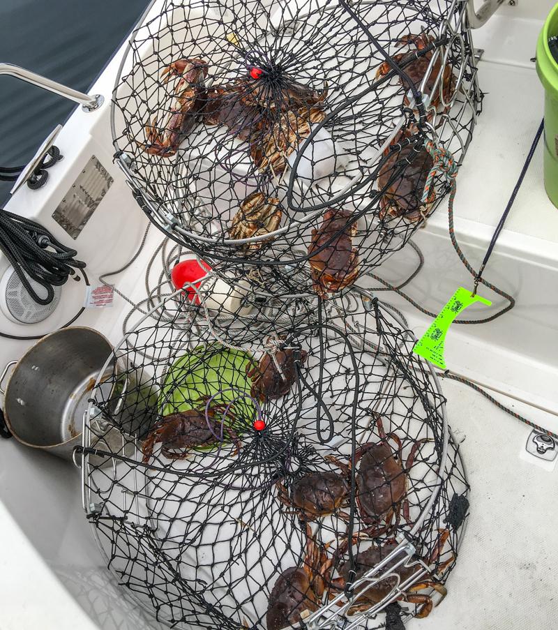 Crabtraps