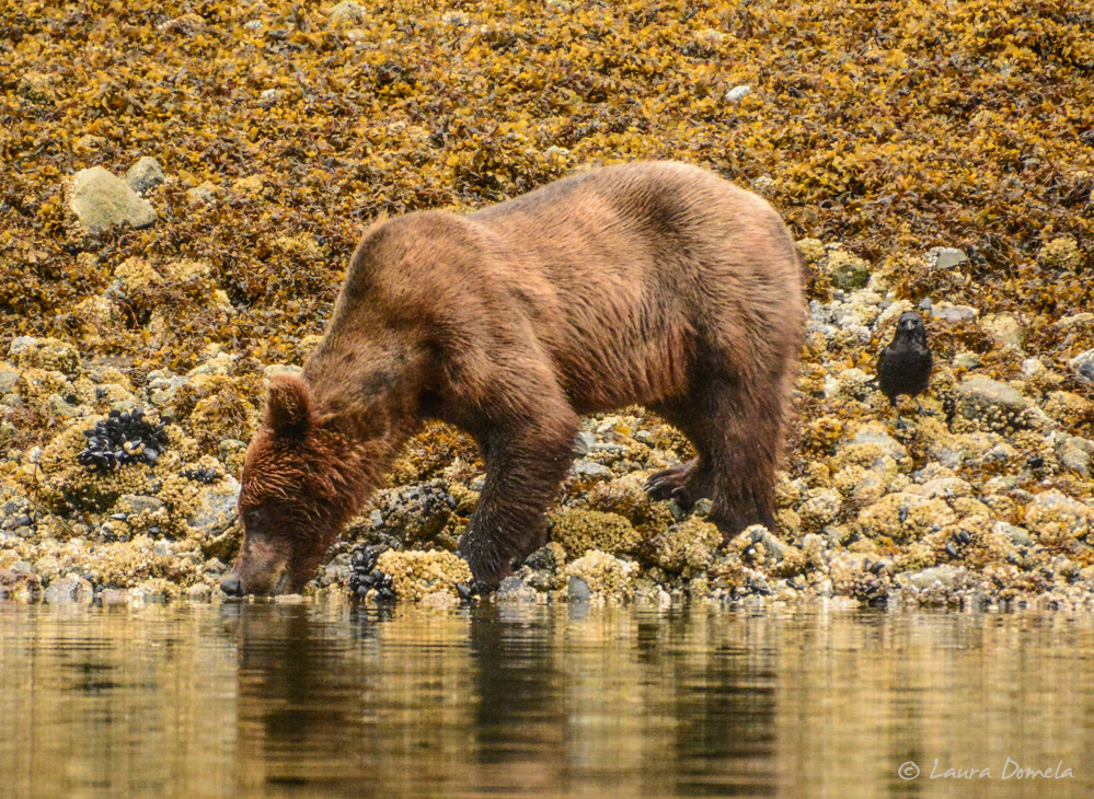 ford_grizzly-2516