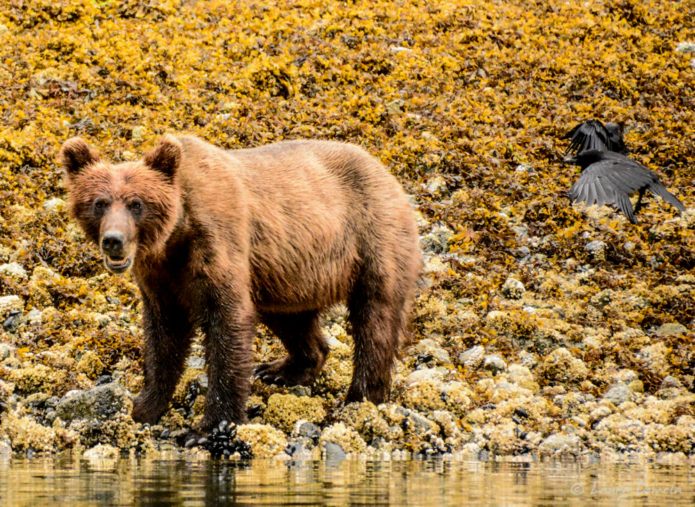 ford_grizzly-2530