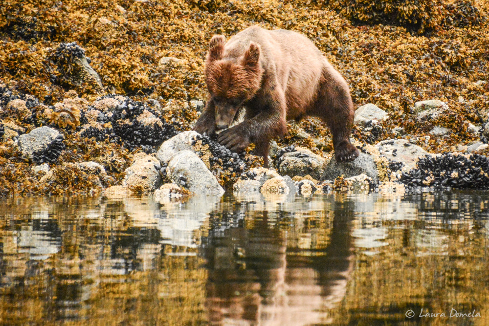 ford_grizzly-2590