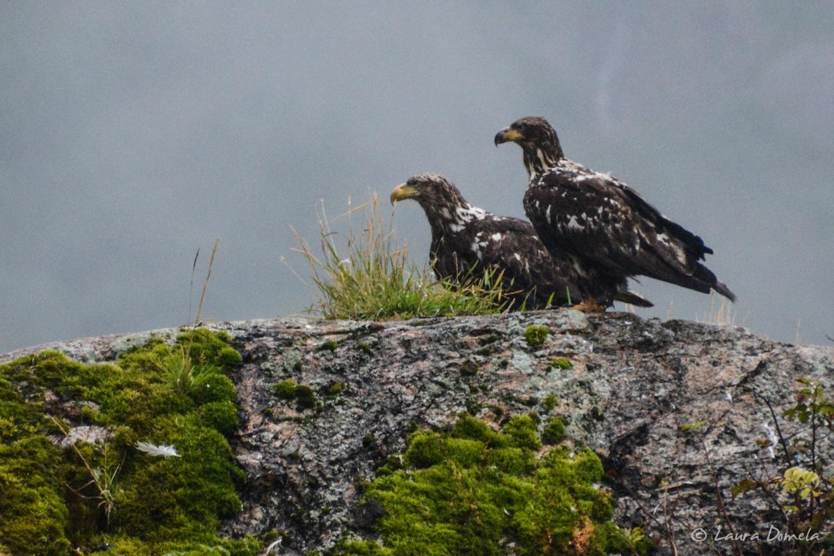takatz_eagles-5365