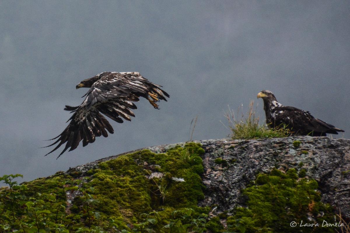 takatz_eagles-5366
