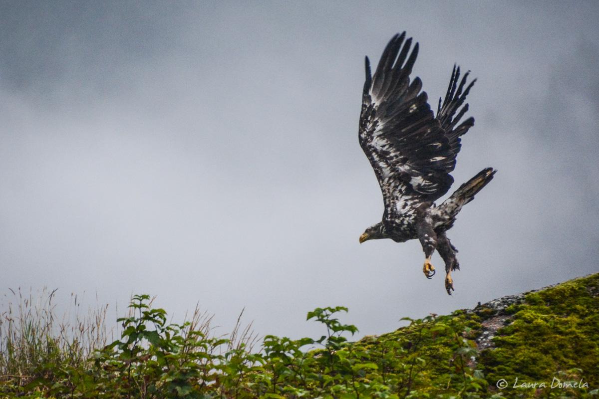 takatzbay_eagles-5368