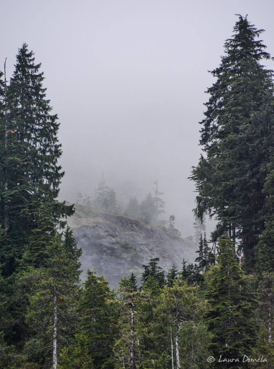takatzbay_trees-5288