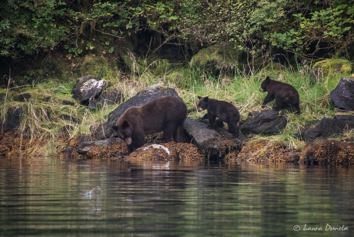 walkercove_bears-5952