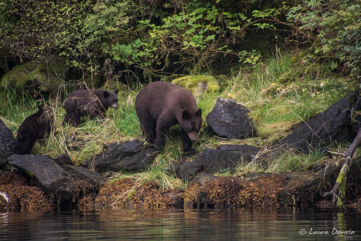 walkercove_bears-5954