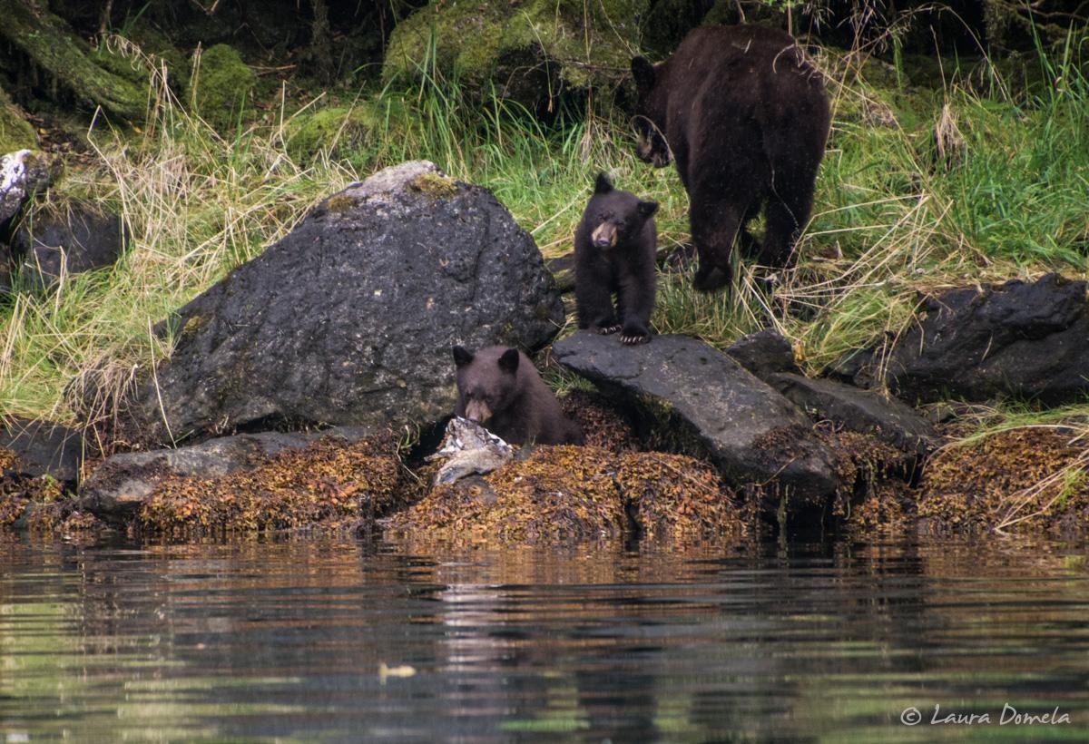 walkercove_bears-5962