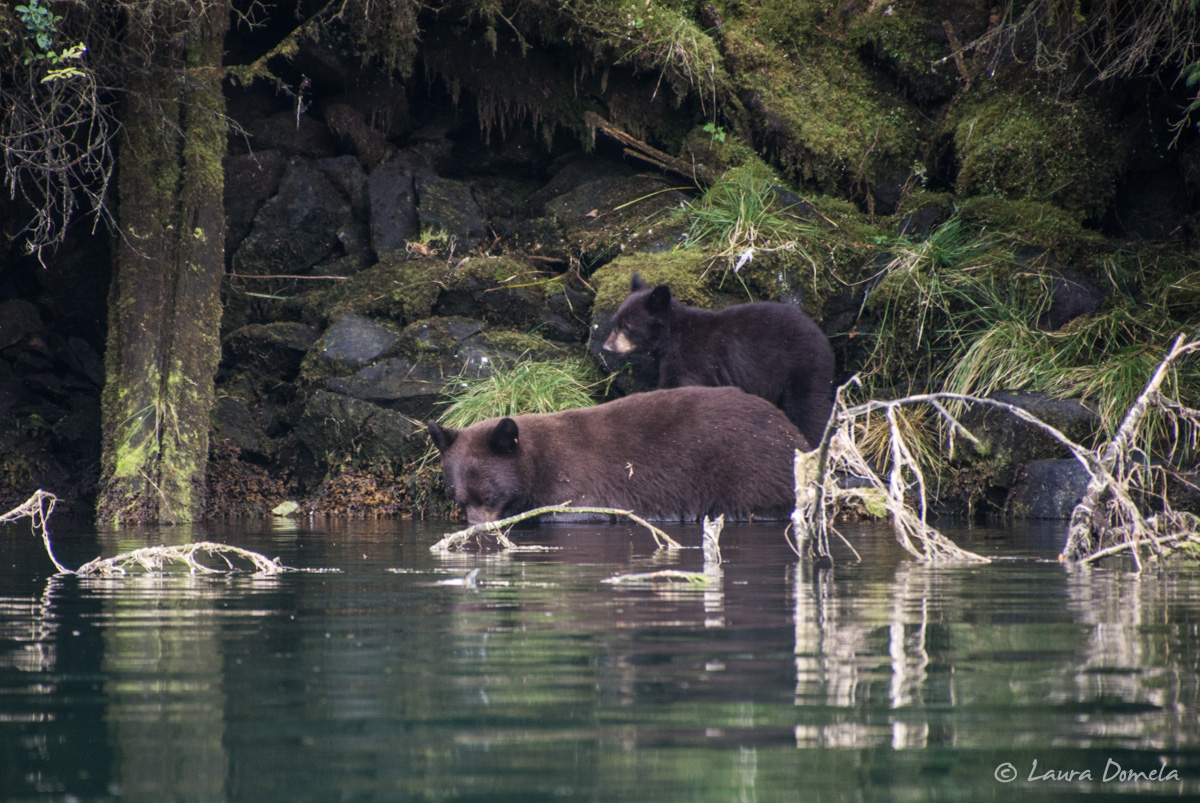 walkercove_bears-5964