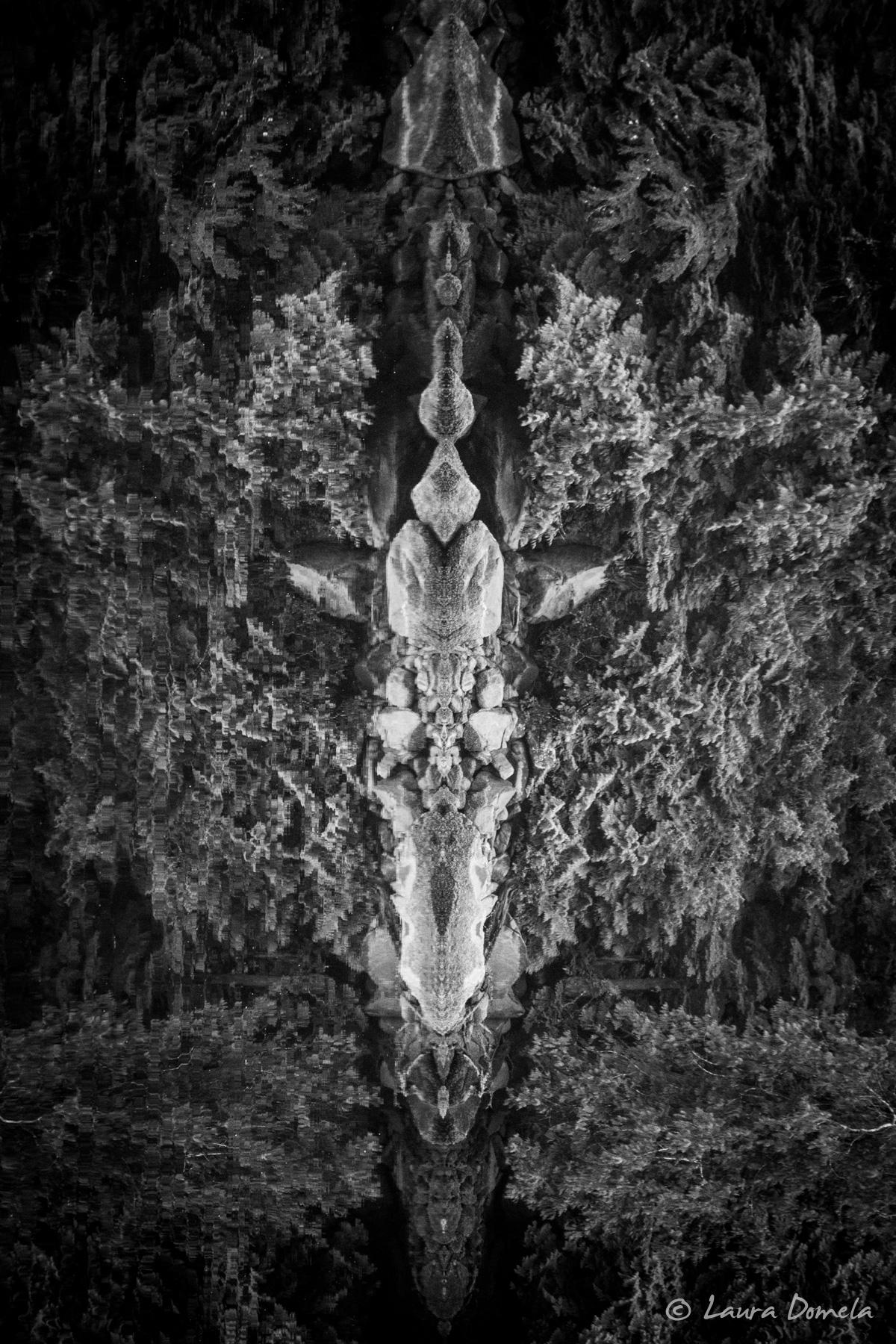 reflectiontotem-6799