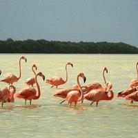 Birdwatching and jungle trips at Celestun, Yucatan.