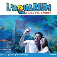 Laquarium el acuario de Playa del Carmen Aquarium