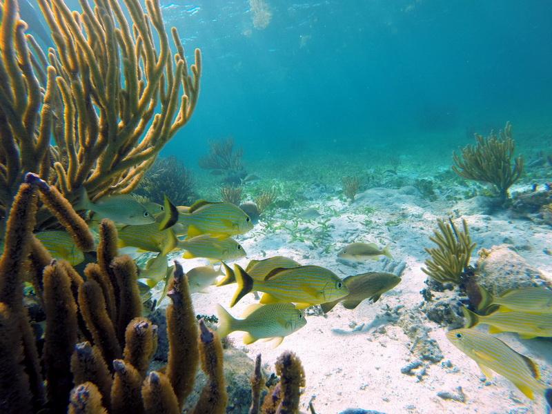 Snorquel Puerto Morelos 2