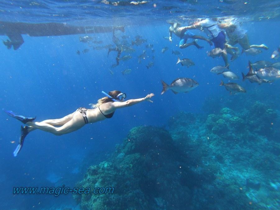 reff snorkel