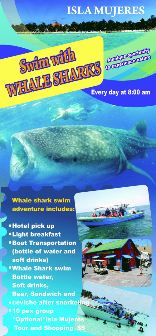 Whale shark swim tour flyer