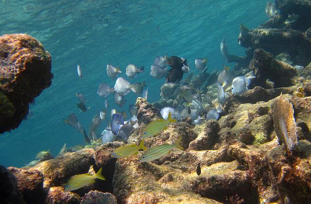 Paamul Snorkeling Riviera Maya