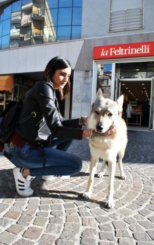 Margot, detta affettuosamente Margie, è una femmina di cane lupo cecoslovacco di otto anni, nata il 27/10/2010.