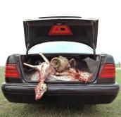 Adrian Paci, Flesh-Mercedes 2002, foto su PVC, cm 290x290, esemplare 1 di 3, numero archivio 2290, courtesy Claudio Poleschi