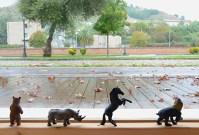 Le costellazioni animali di Dunia Mauro