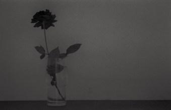 Paolo Dell'Elce, Rosa nel bicchiere, 1987