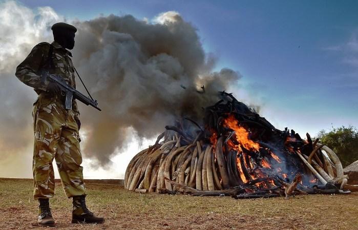 KENYA-WILDLIFE-CONSERVATION-IVORY-BURN
