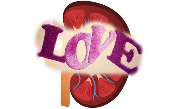 Kidney-and-love