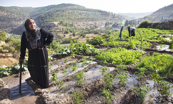 A file picture taken on June 17, 2012, shows a Palestinian farmer irrigating her land in the West Bank village of Battir, located between Jerusalem and Bethlehem, where eight living families take daily turns watering their crops from the natural springs. UN cultural agency UNESCO on June 20, 2014, granted endangered World Heritage status to ancient terraces in the West Bank that are under threat from the Israeli separation barrier.
