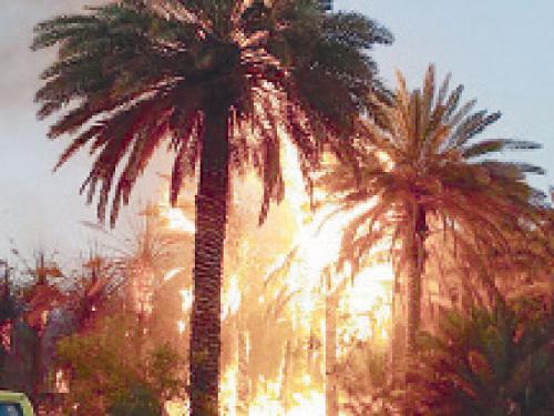 Fire rages in a date farm in Domat Al-Jandal.