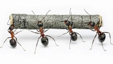 Photo of النمل 8 حلول طبيعية لمكافحته