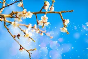 حساسية الربيع او الحساسية الموسمية اسبابها و و سبل الوقاية منها