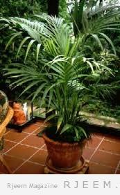 10 نصائح للمحافظة على نباتات الزينة وتغذيتها