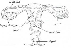 الافرازات المهبلية وعلاجها