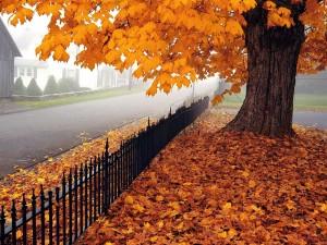 5 نصائح للحصول على النشاط والقوة في الخريف