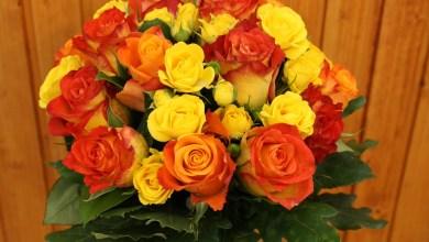 Photo of مسكات زهور باللون البرتقالي