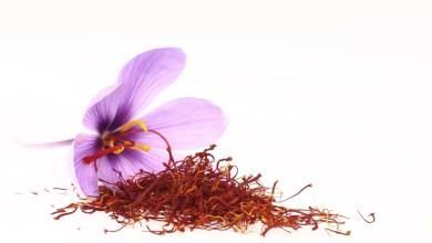 Photo of الزعفران-تعرفي على فوائد الزعفران المذهلة لك و لصحتك
