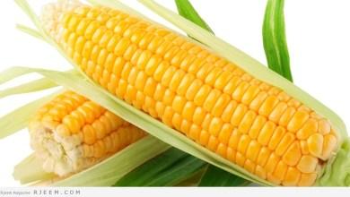 Photo of فوائد الذرة – تعرف على فوائد الذرة الصحية والعلاجية