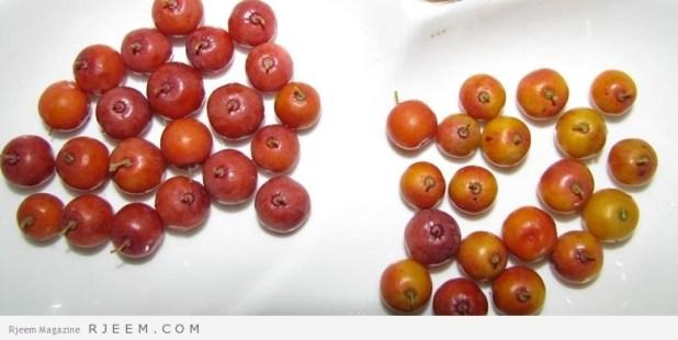 9 فوائد جمالية لنبات السدر