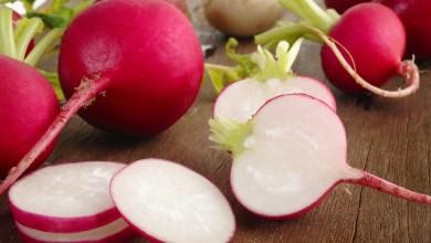 Photo of اكثر من 10 فوائد لنبات الفجل