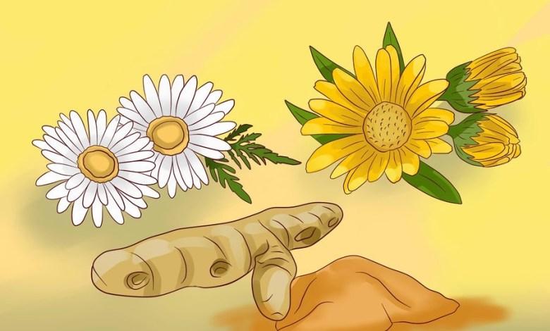 Photo of اهمية الأعشاب لعلاج الصداع النصفي