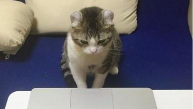 Photo of فيديو: هل تصدِّق أن هذا القط قد يتفوَّق عليك؟.. جرب بنفسك