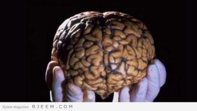 Photo of وظائف الدماغ في جسم الإنسان