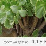 Photo of ما هي فوائد نبات لوسيما خيوس