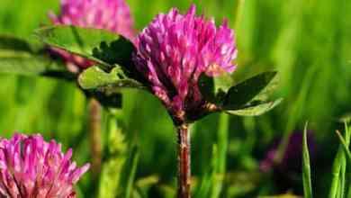 Photo of أعشاب طبيعية تزيد الخصوبة عند المرأة