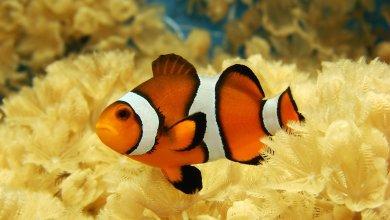 Photo of السؤال المحير.. هل الأسماك تنام؟