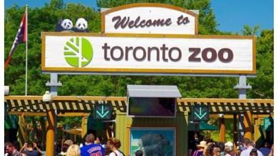 Photo of أفضل 10 حدائق حيوان في العالم